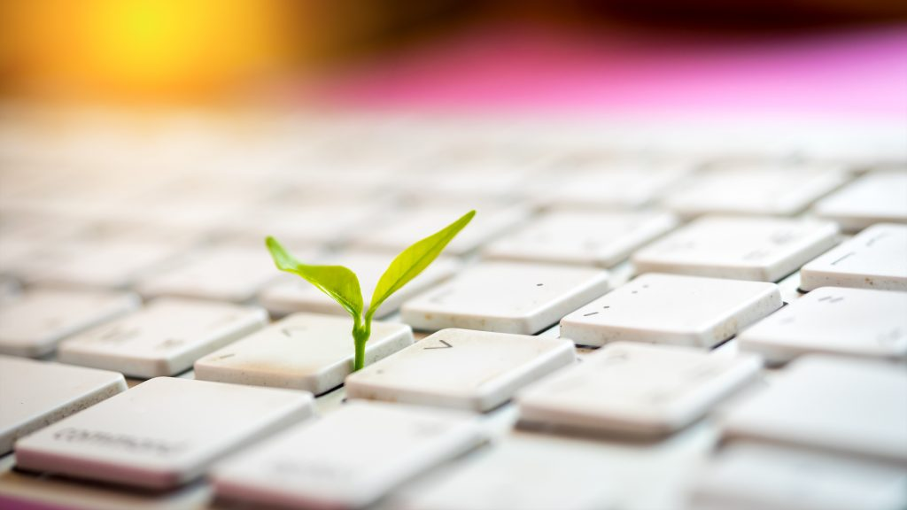 Computer keyboard with a small plant growing between the keys.