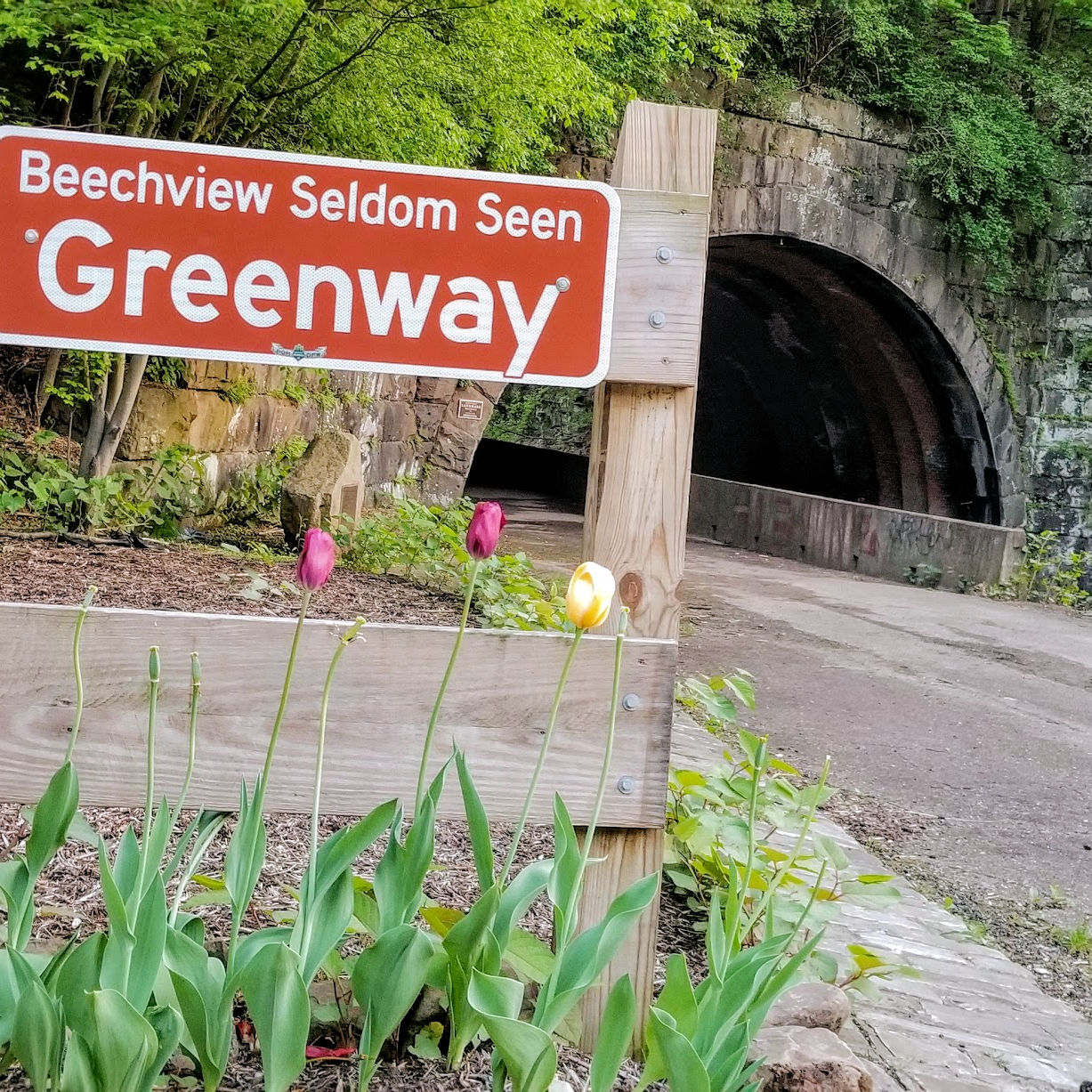 A fence with a sign for Seldom Seen Greenway in front of a historic stone tunnel and surrounded by tulips in bloom.