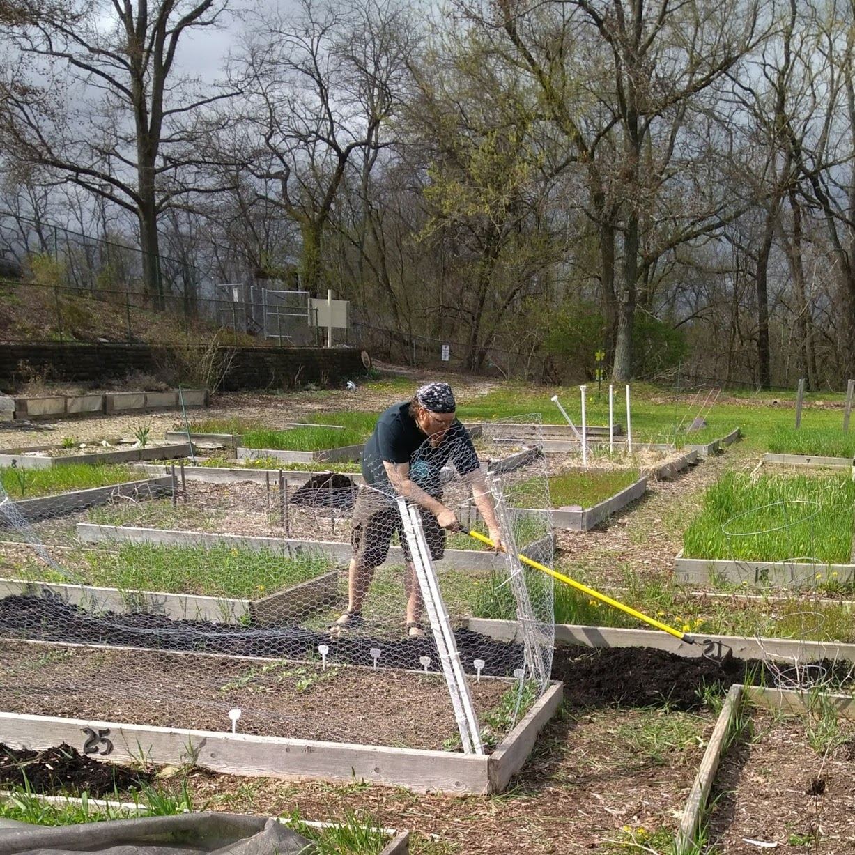 A man digging in a garden with raised beds all around.